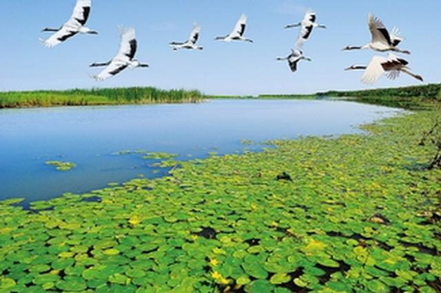 生态好了鸟儿多了 江西最新统计鸟类新增20种