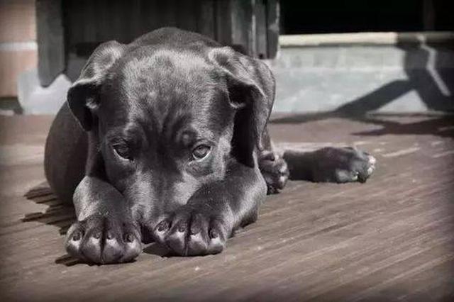 异烟肼只毒狗对人无害?真相如何一次讲明白