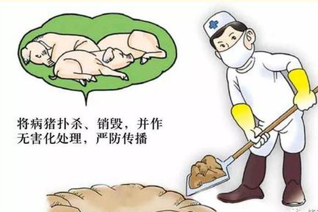 江西省政府紧急部署防控非洲猪瘟