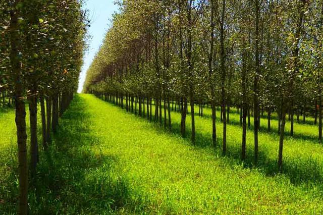 江西:2.75亿元中央预算资金投入防护林