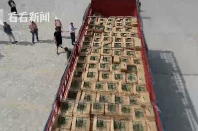 中奖的3万斤西瓜到了!她全部送给了公交司机