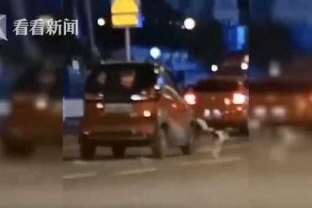 胡闹!女子开车在路中央遛狗 还辩称因为狗太…