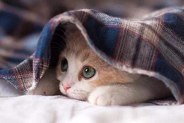 """喜歡貓但對貓毛過敏怎么辦?新型疫苗讓人放心""""擼貓"""""""
