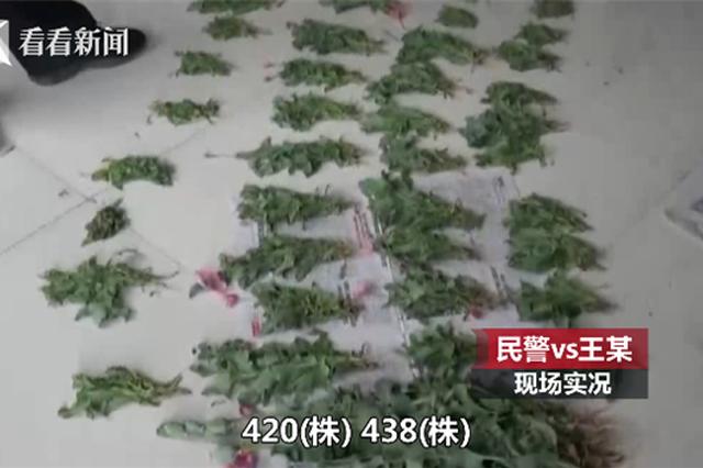 """男子种480株""""观赏植物"""" 民警一查把他拘了"""