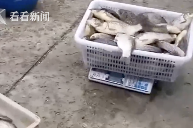 交警买了他的鱼…罚款7000元 拘留20天!