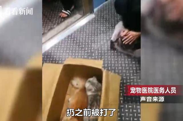 3只猫咪遭高空扔下血迹斑斑 身上还有被虐伤痕