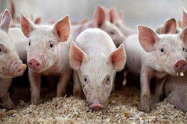 农业农村部在昌召开九省区市生猪生产调度会