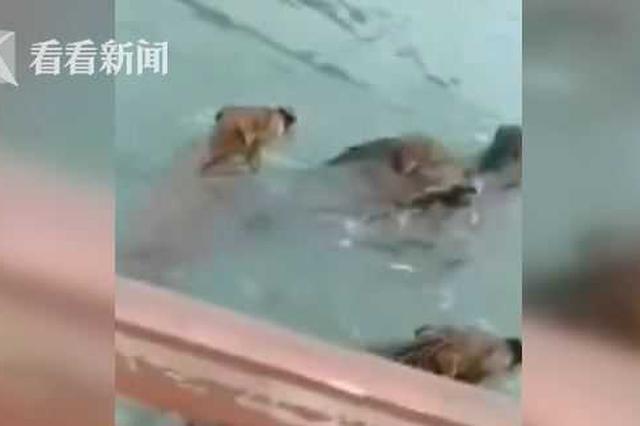 """七八个""""不明物体""""江中游 村民仔细一看震惊了"""