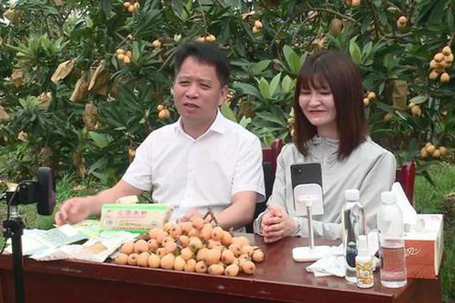 恰噶!抚州临川区区长直播带货 卖出6000斤枇杷