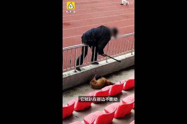 九江职业技术学院保安殴打流浪狗 回应:已解聘