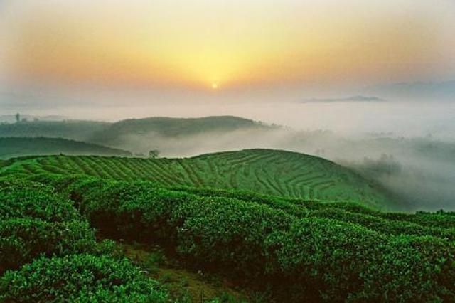 江西:到2022年基本建成农业全产业链标准体系