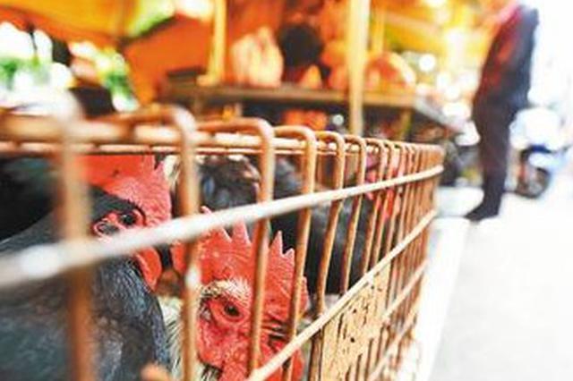 江西:城市建成区农贸市场逐步取消活禽交易