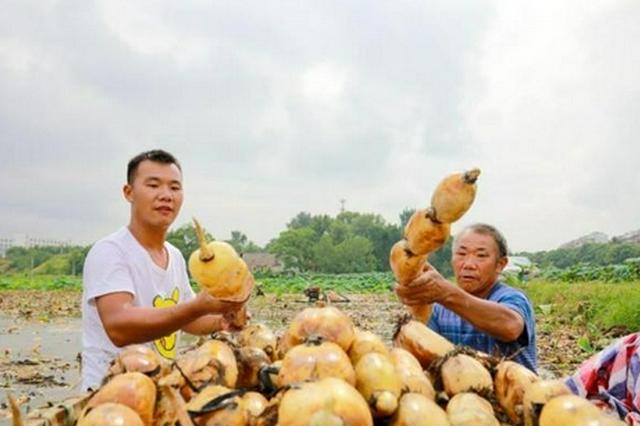 江西累计培育农民合作社7.43万家、家庭农场9.2万家