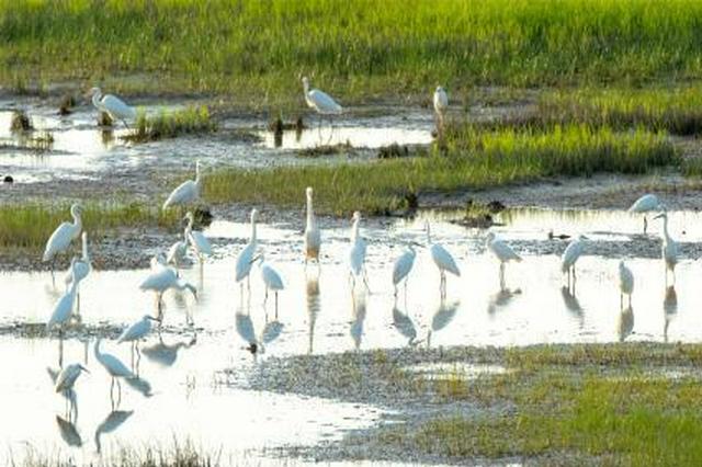 江西在鄱阳湖区域完成湿地恢复与综合治理7.5万余亩
