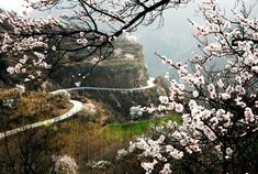 河南春季最美十大花海