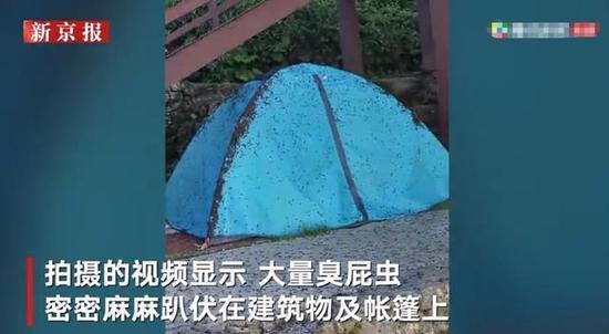 武功山山顶现大量臭屁虫 密密麻麻趴伏在建筑物及帐篷上