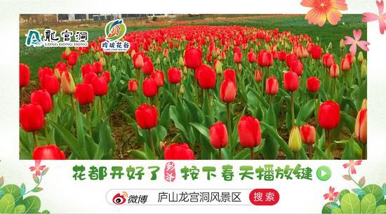 彭泽:春暖花开 玲珑花谷20万株郁金香等你来赏