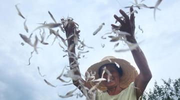 鄱阳湖迎丰收季 渔民忙晒鱼干密密麻麻太壮观