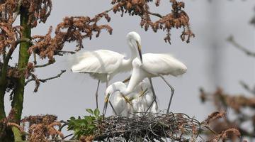 """象山森林公园:""""鹭鸟王国""""生机勃勃"""