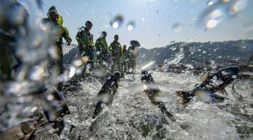仙女湖冬日巨网首捕12.5万斤有机鱼