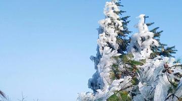 南昌梅岭雾凇如雪 冰花晶莹如钻石