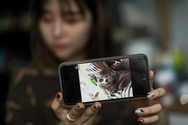 澳洲华人猫贩低价买下病猫 高价转卖中国留学生