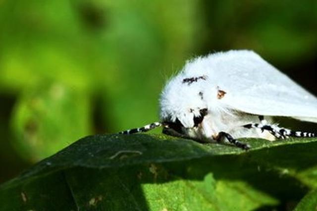 今年江西林业害虫或呈上升趋势 要及早做好防控预案