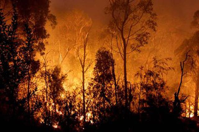 赣县区侦破多起森林火灾案件 3名嫌疑人被刑拘