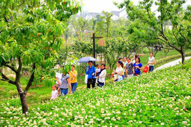 大年初四萍乡共接待游客8.87万人 乡村游成主流