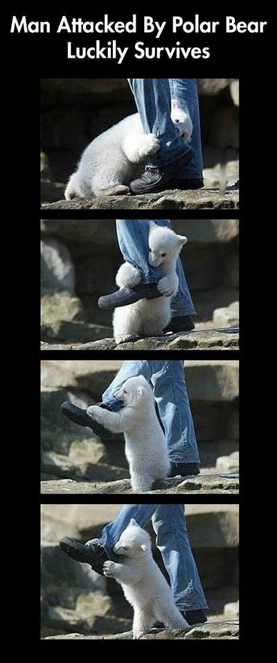 一个人类在北极熊的攻击下侥幸生还