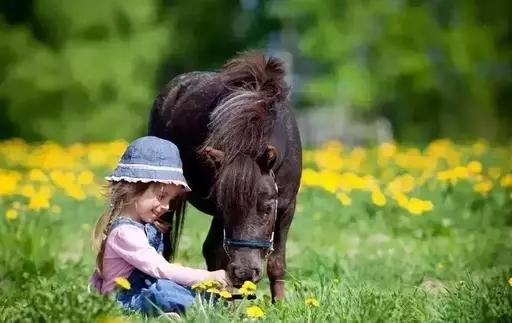 """马儿饲养小贴士:实际喂养量需要""""按马考量"""""""