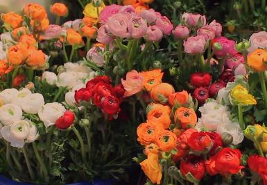 大连花市丨送自己一束洋牡丹