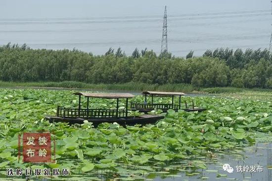 """莲花湿地公园成夏日好""""趣""""处"""
