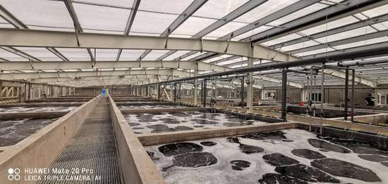 锦州培育的1.2亿尾虾苗放入渤海