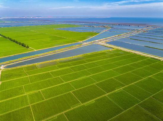 农垦改革迸发活力,丹东稻米畅销
