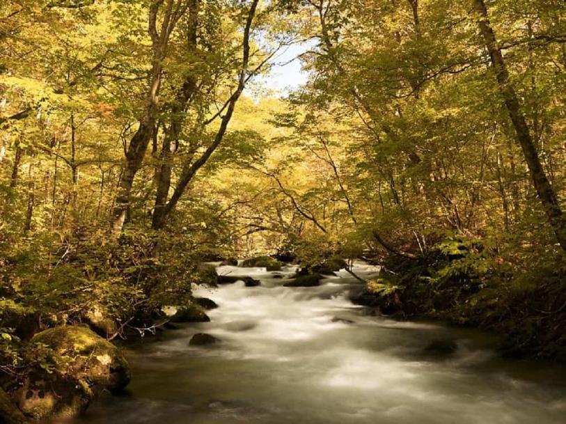 在青森金色森林赏枫 一期一会的秋日绝景