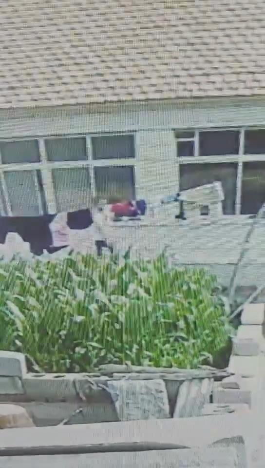 辽宁建昌:大胆窃贼白天入室盗窃 无视摄像头