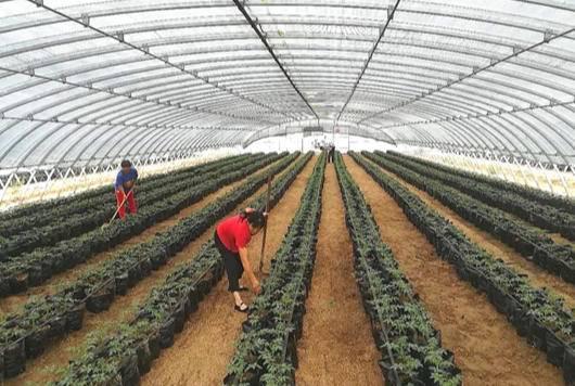 """农业绿色发展,凌海农产品被""""端上""""上海市民餐桌"""