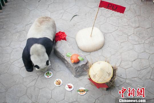 """大熊猫品""""年夜饭""""。 王智勇 摄"""