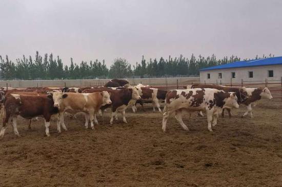利用产业扶贫资金通过养殖业壮大村集体经济,扶助贫困户。