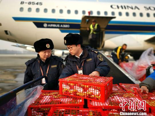 沈阳机场海关在停机坪清点货物。王景巍摄