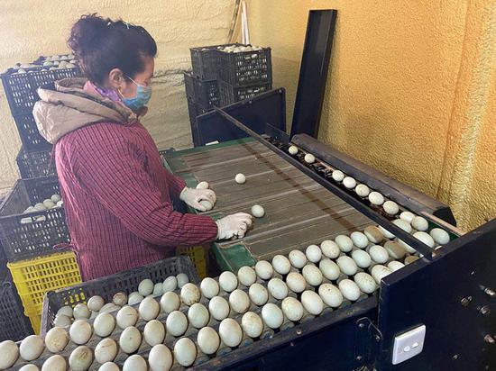丹东古楼子鸭蛋:火山黄泥腌制咸香鸭蛋