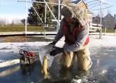 罕见奇景!大鱼吃小鱼时遇湖面结冰 双双被封印