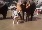 实拍游客摸大象鼻子 被瞬间撞飞空中
