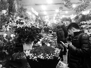 """花卉市场人气""""爆棚"""",各式玫瑰花的价格连日猛涨。"""