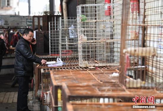 资料图:湖南新增4例人感染H7N9病例 长沙活禽市场休市。 杨华峰 摄