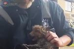 小狐狸掉入排水管道内 救援人员成功解救