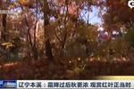 辽宁本溪:霜降过后秋更浓 观赏红叶正当时