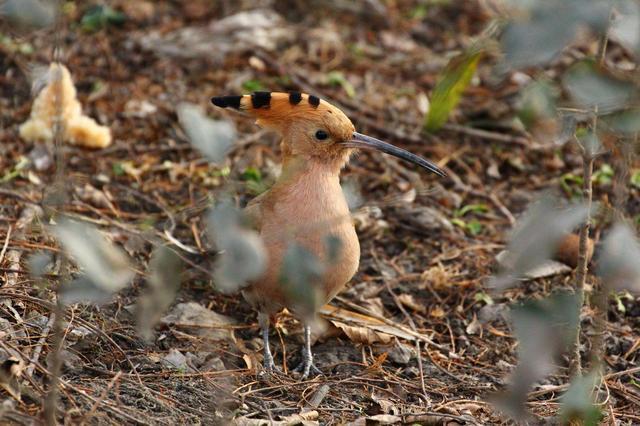 沈阳1700余只保护鸟类被放归自然