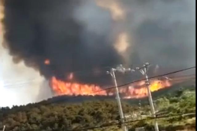 辽宁葫芦岛发生山火 火势凶猛正在救援(图)